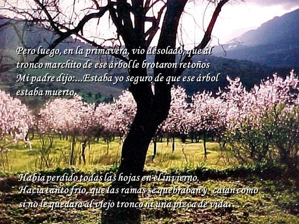 Lecci n de vida recuerdo que un invierno mi padre for Arboles que no se le caen las hojas en invierno