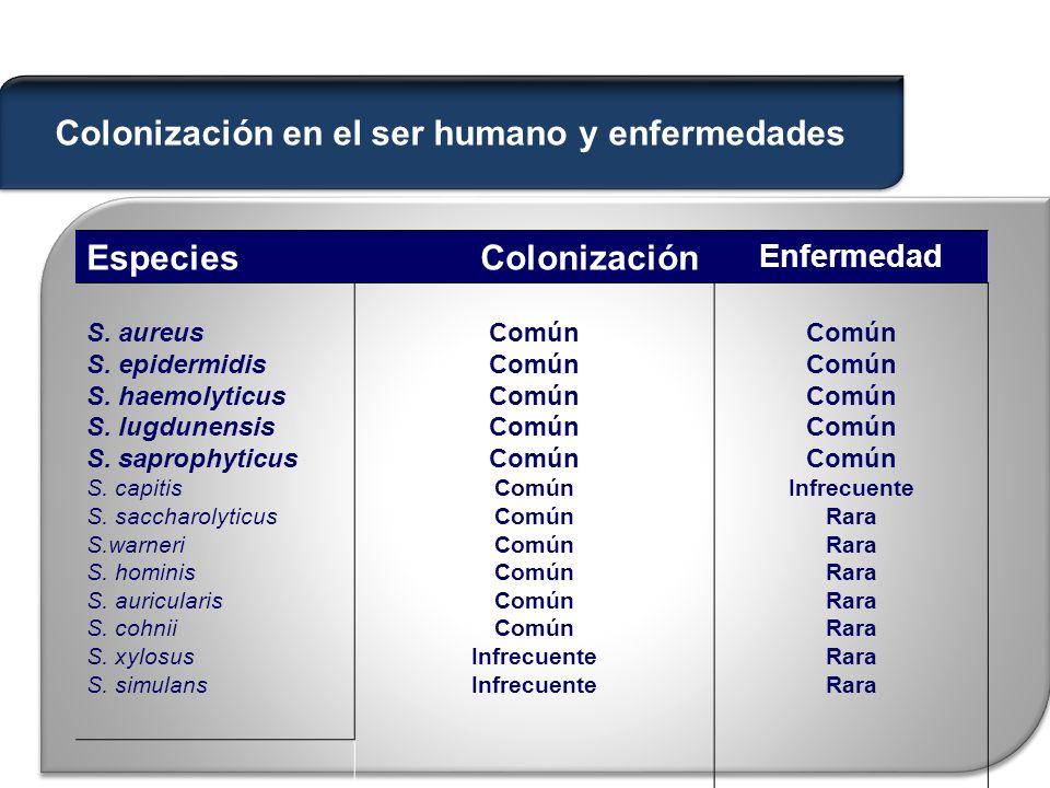Colonización en el ser humano y enfermedades