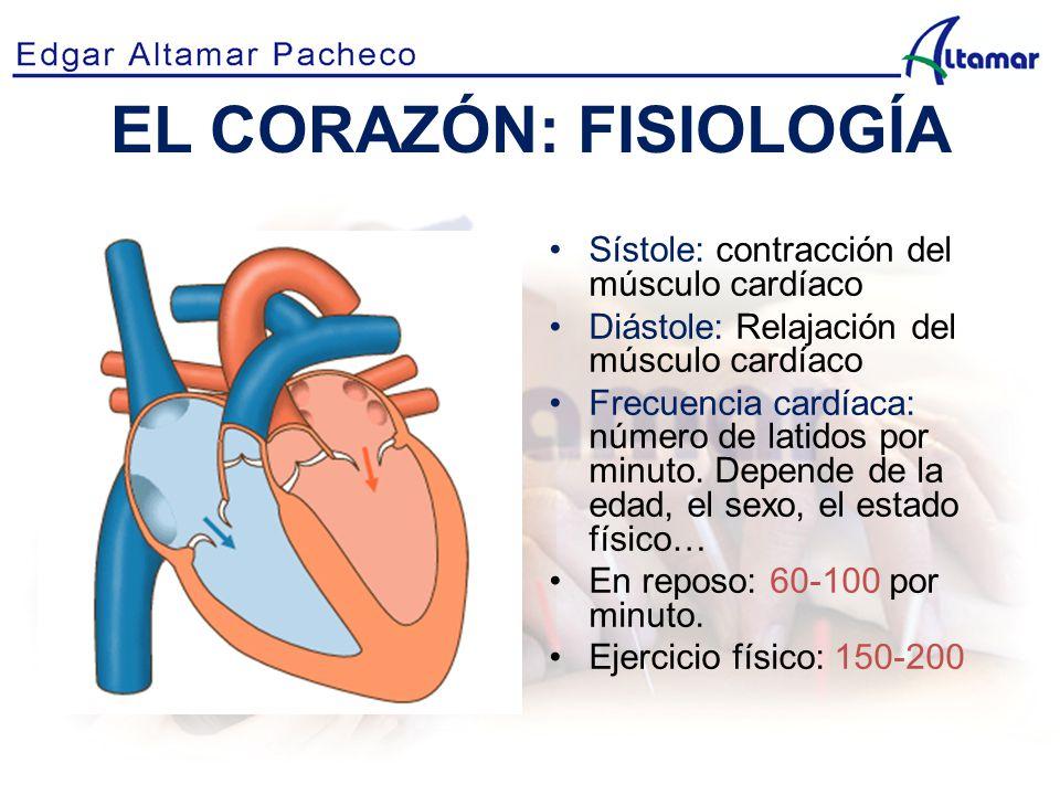 Moderno Anatomía Y Fisiología Del Corazón Become Fotos - Imágenes de ...