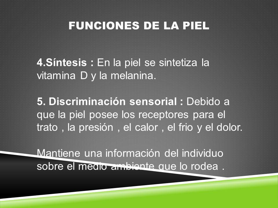 FUNCIONES DE LA PIEL 4.Síntesis : En la piel se sintetiza la vitamina D y la melanina.