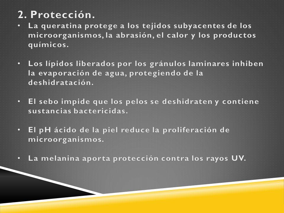 2. Protección. La queratina protege a los tejidos subyacentes de los microorganismos, la abrasión, el calor y los productos químicos.