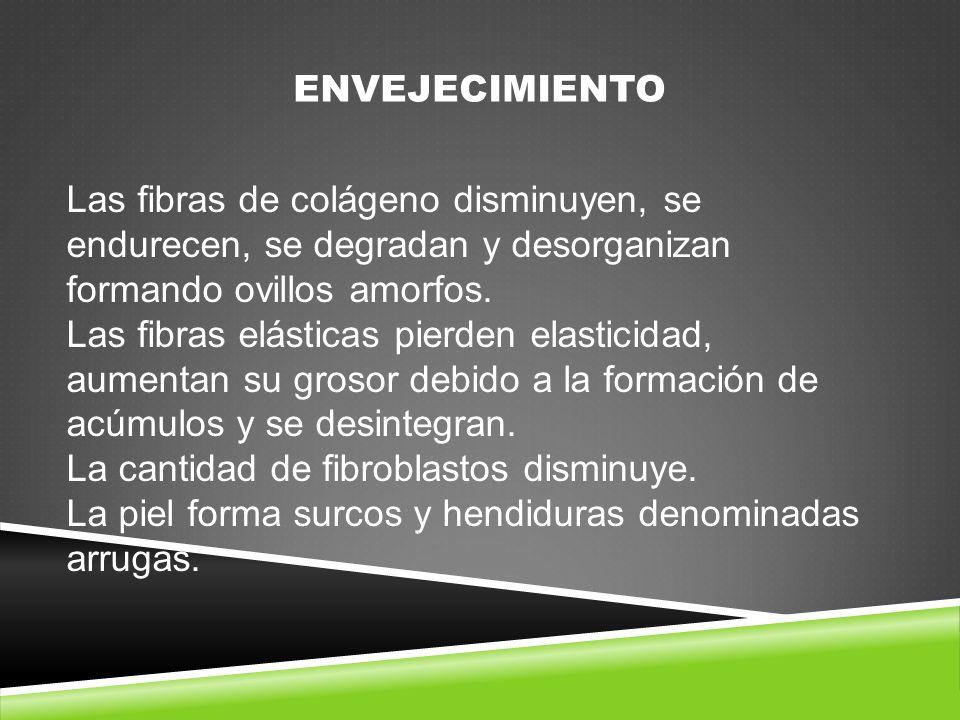 ENVEJECIMIENTO Las fibras de colágeno disminuyen, se endurecen, se degradan y desorganizan formando ovillos amorfos.