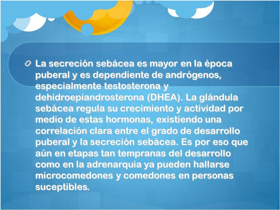 La secreción sebácea es mayor en la época puberal y es dependiente de andrógenos, especialmente testosterona y dehidroepiandrosterona (DHEA).