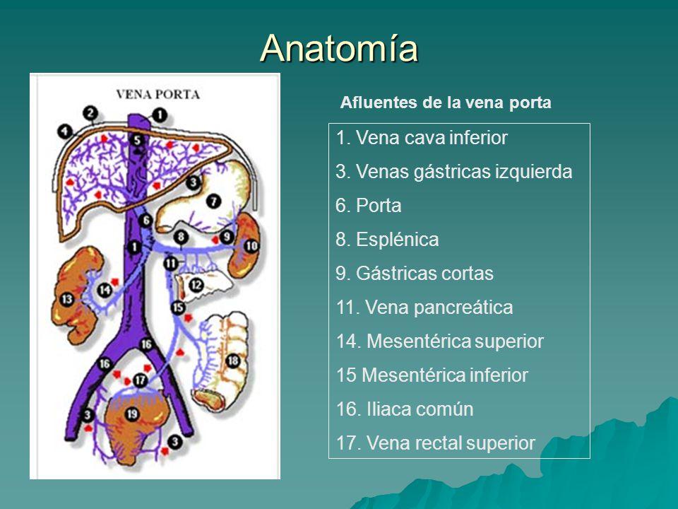 Lujoso La Anatomía De La Vena Cava Inferior Bandera - Imágenes de ...