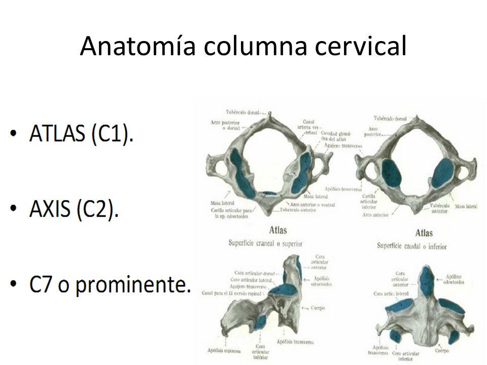 Famoso La Anatomía De La Columna Cervical Ideas - Imágenes de ...