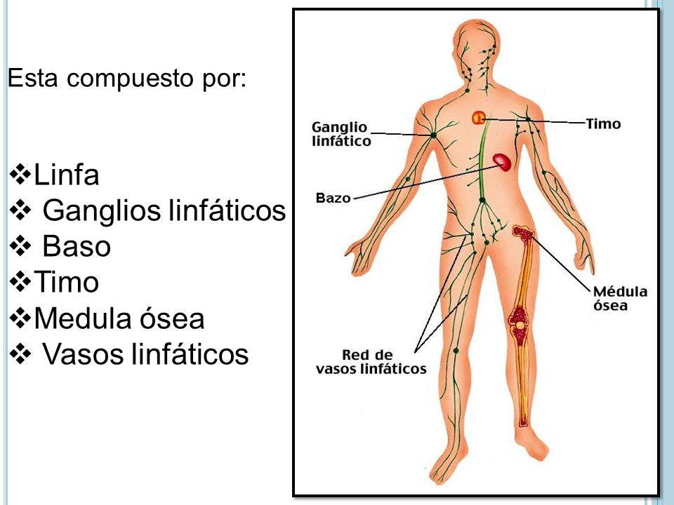 Contemporáneo Ganglios Linfáticos Ubicación Composición - Anatomía ...