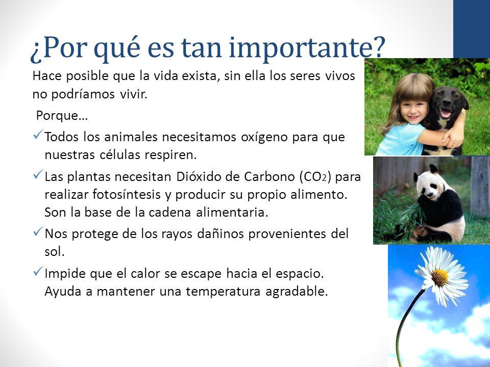 Unidad 1 las capas de la tierra atm sfera ppt video for Porque son importantes los arboles wikipedia