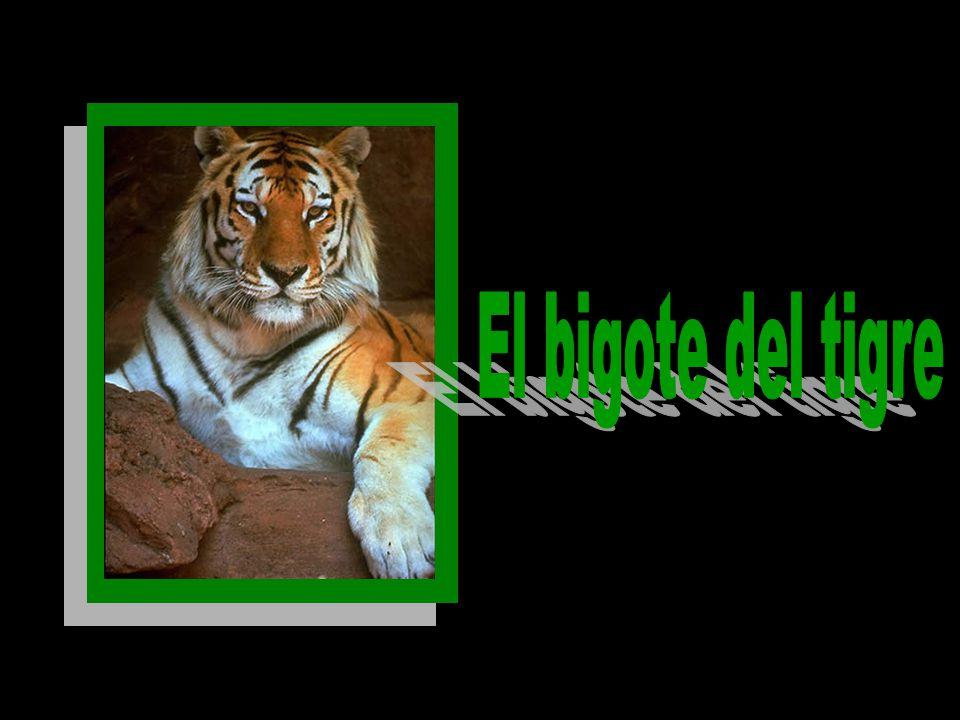 El bigote del tigre
