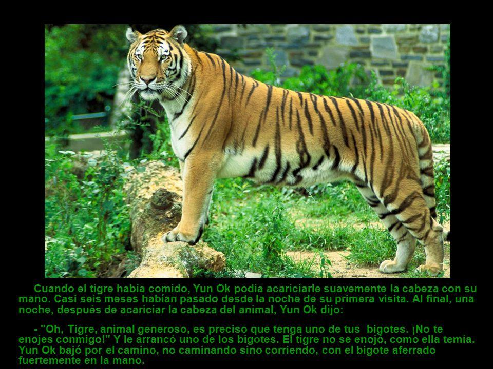 Cuando el tigre había comido, Yun Ok podía acariciarle suavemente la cabeza con su mano. Casi seis meses habían pasado desde la noche de su primera visita. Al final, una noche, después de acariciar la cabeza del animal, Yun Ok dijo: