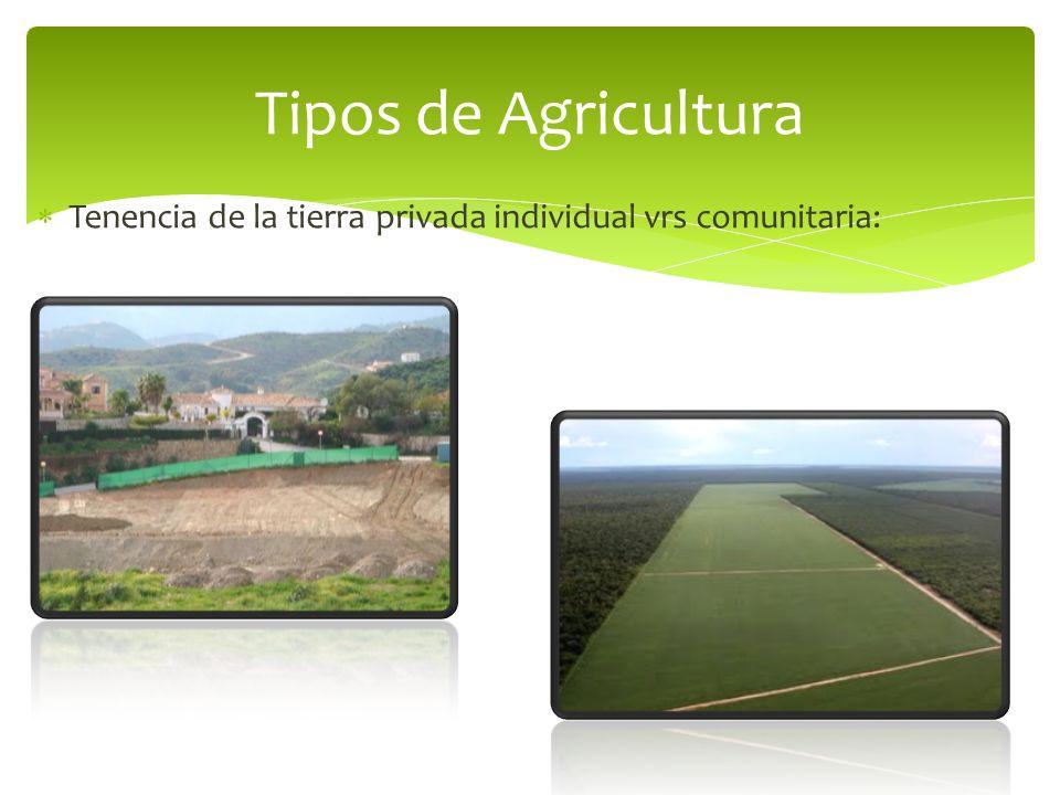 Tipos de Agricultura Tenencia de la tierra privada individual vrs comunitaria: