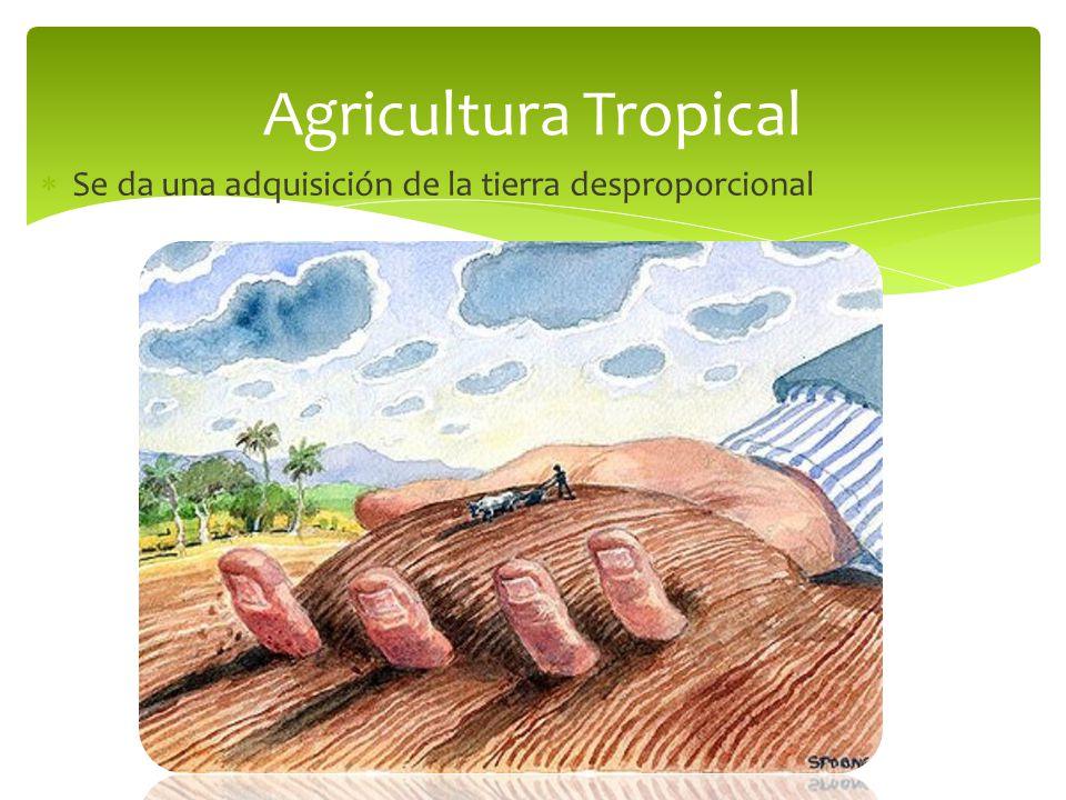 Agricultura Tropical Se da una adquisición de la tierra desproporcional