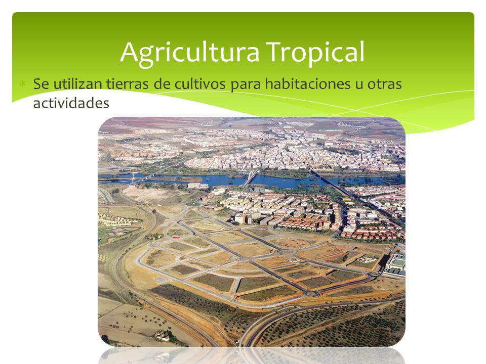 Agricultura Tropical Se utilizan tierras de cultivos para habitaciones u otras actividades