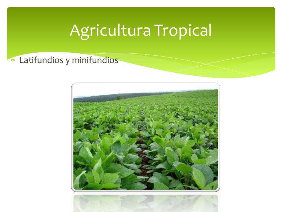 Agricultura Tropical Latifundios y minifundios