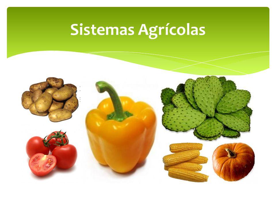 Sistemas Agrícolas En el caso de América son áreas Aztecas, Mayas e Incas (papa, chile, tomate, nopal, maíz, calabazas)