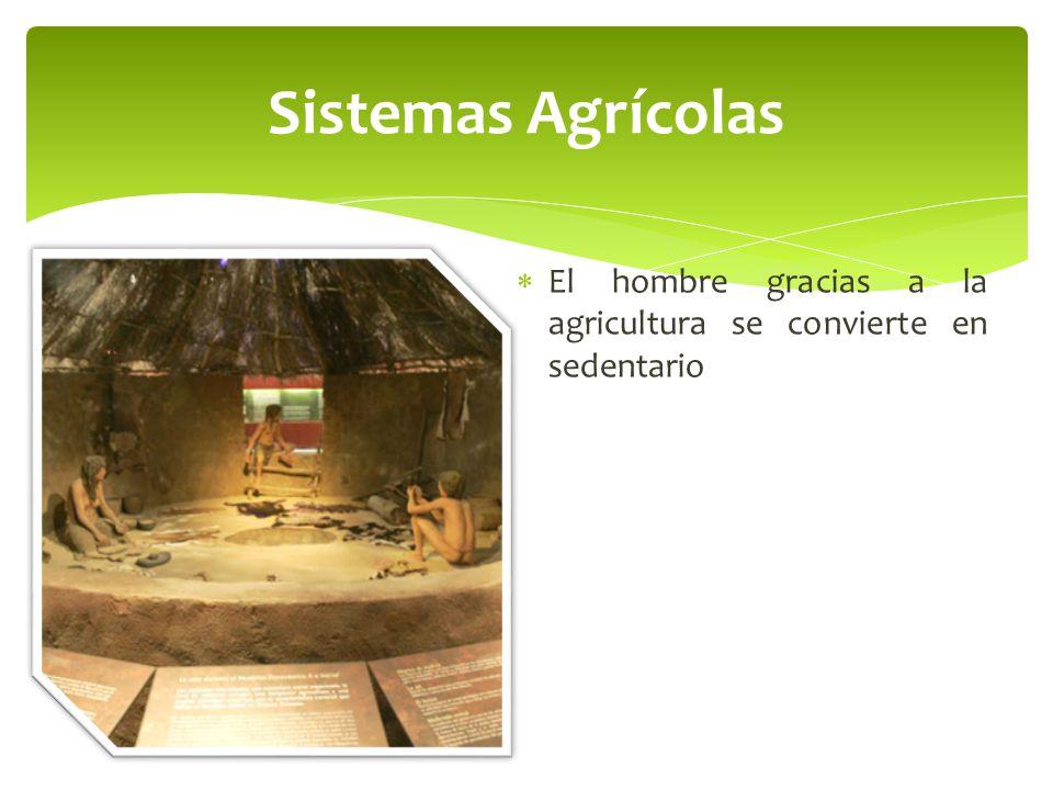 Sistemas Agrícolas El hombre gracias a la agricultura se convierte en sedentario