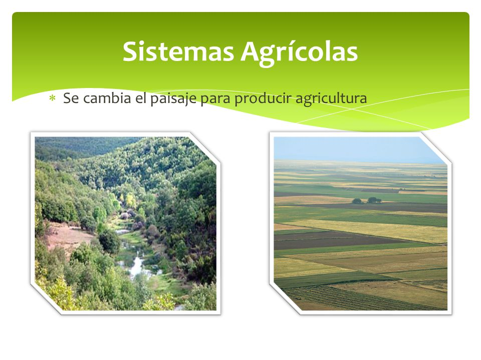 Sistemas Agrícolas Se cambia el paisaje para producir agricultura