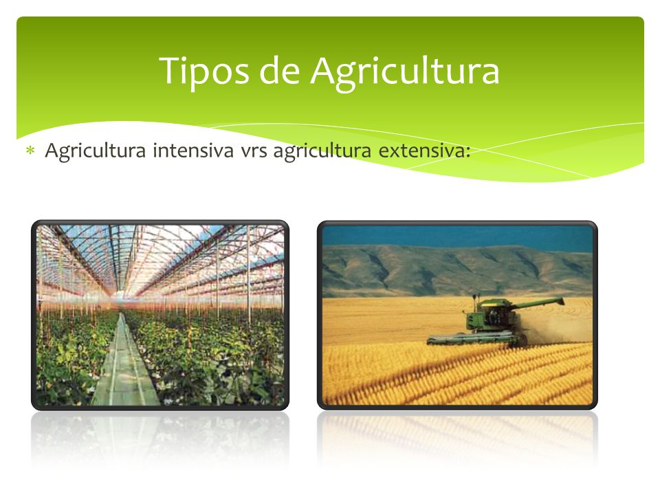 Tipos de Agricultura Agricultura intensiva vrs agricultura extensiva: