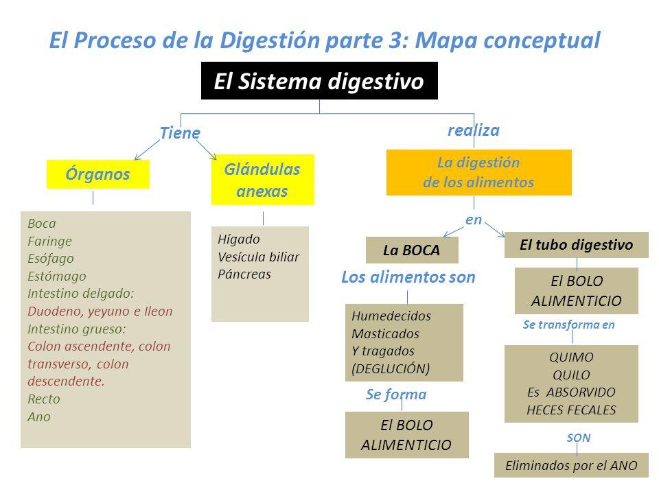 LA FUNCION DE DIGESTIÓN - ppt video online descargar