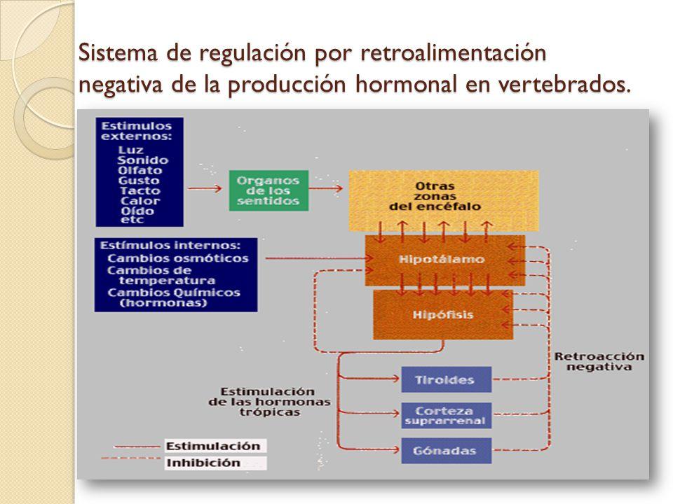 Sistema de regulación por retroalimentación negativa de la producción hormonal en vertebrados.