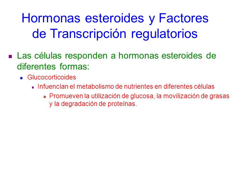 steroid response element