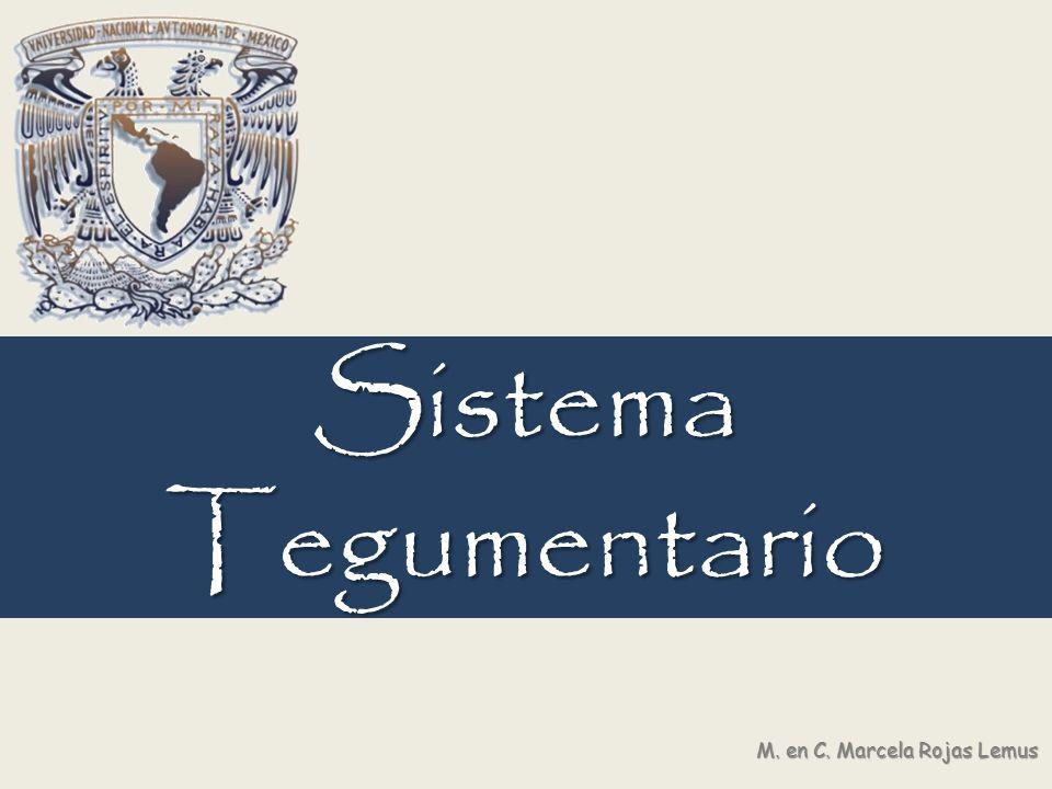 Sistema Tegumentario M. en C. Marcela Rojas Lemus