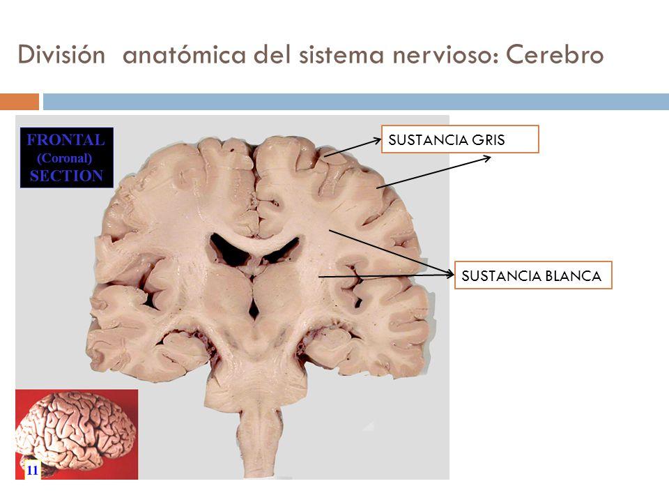 Famoso Anatomía De La Hoja De Hoja De Cálculo Respuestas Ornamento ...