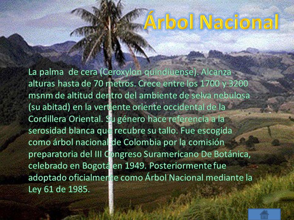 Árbol Nacional