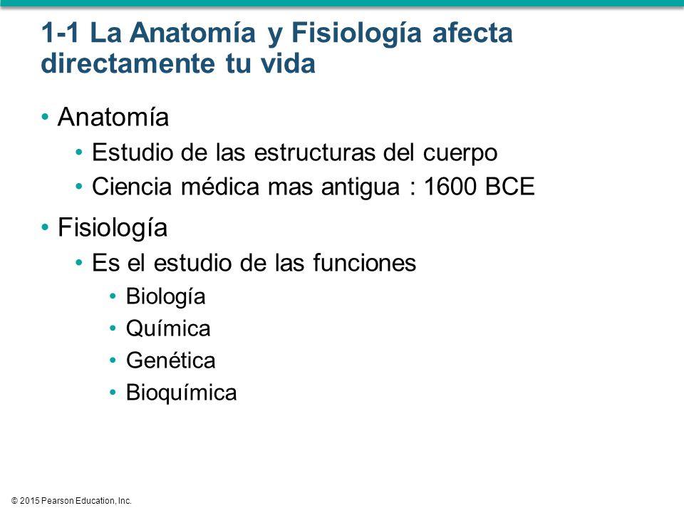 Único Anatomía Y Fisiología De La Ciencia A La Vida Bosquejo ...