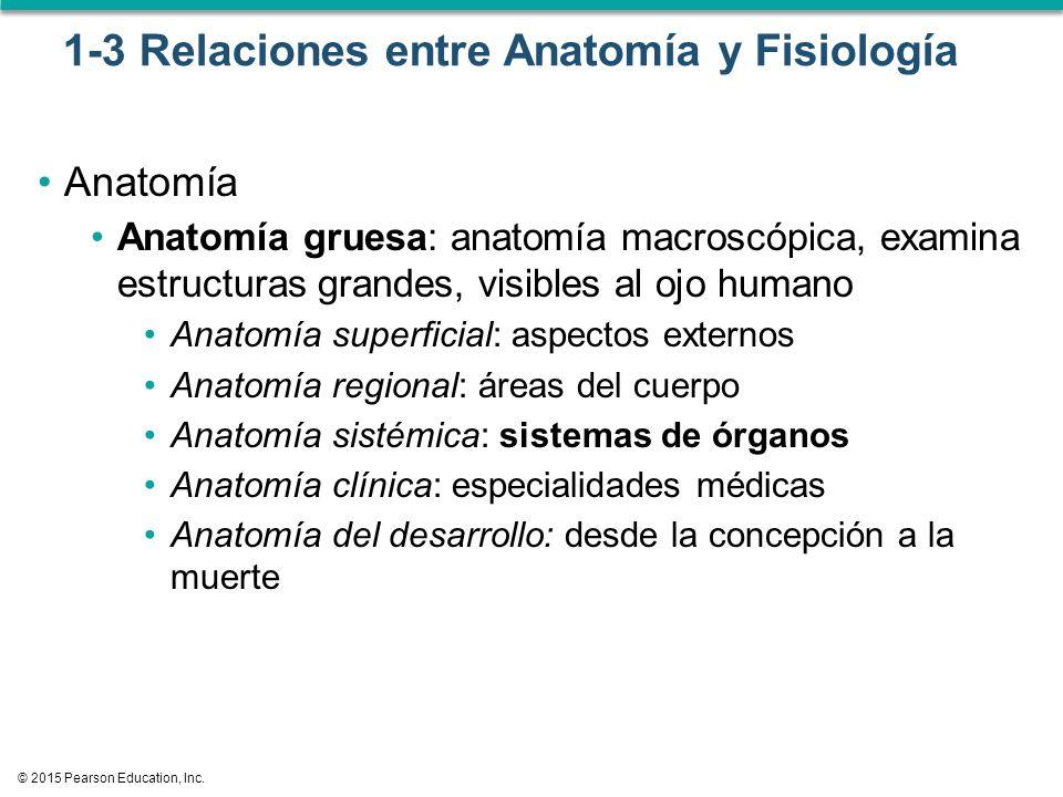 Bonito La Anatomía Y La Fisiología Del Ojo Humano Colección ...