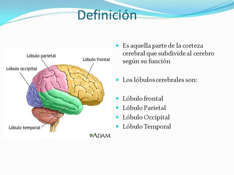 Excepcional La Función De Las Partes Del Cerebro Ideas - Imágenes de ...
