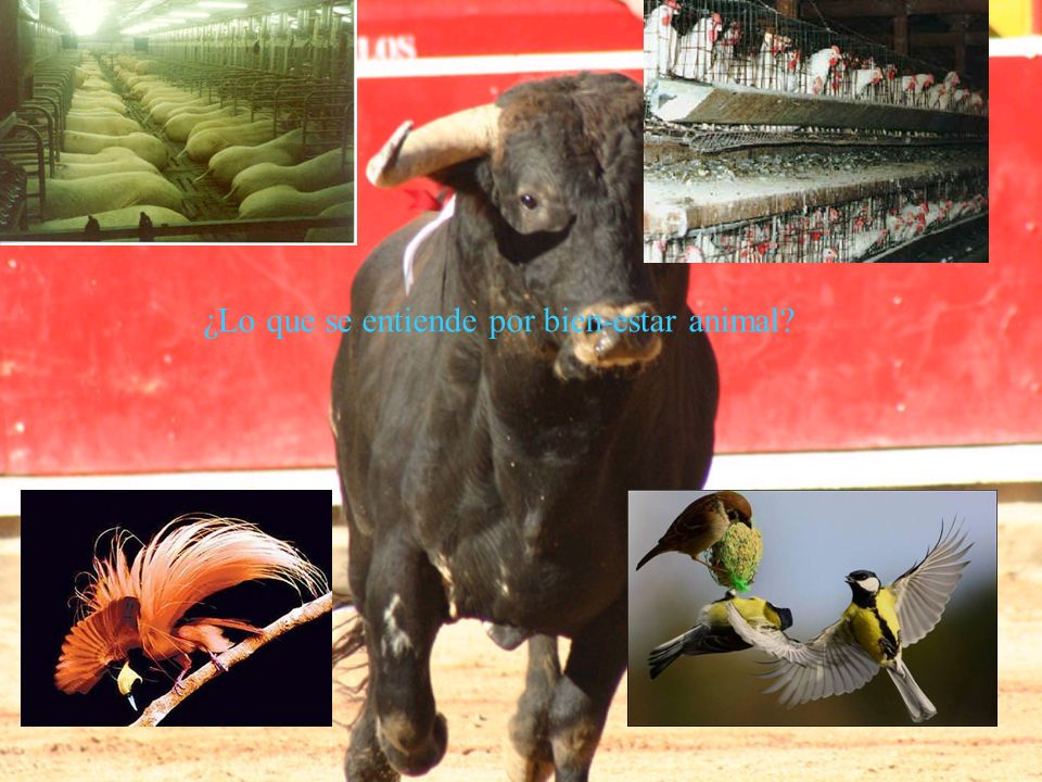 ¿Lo que se entiende por bien-estar animal