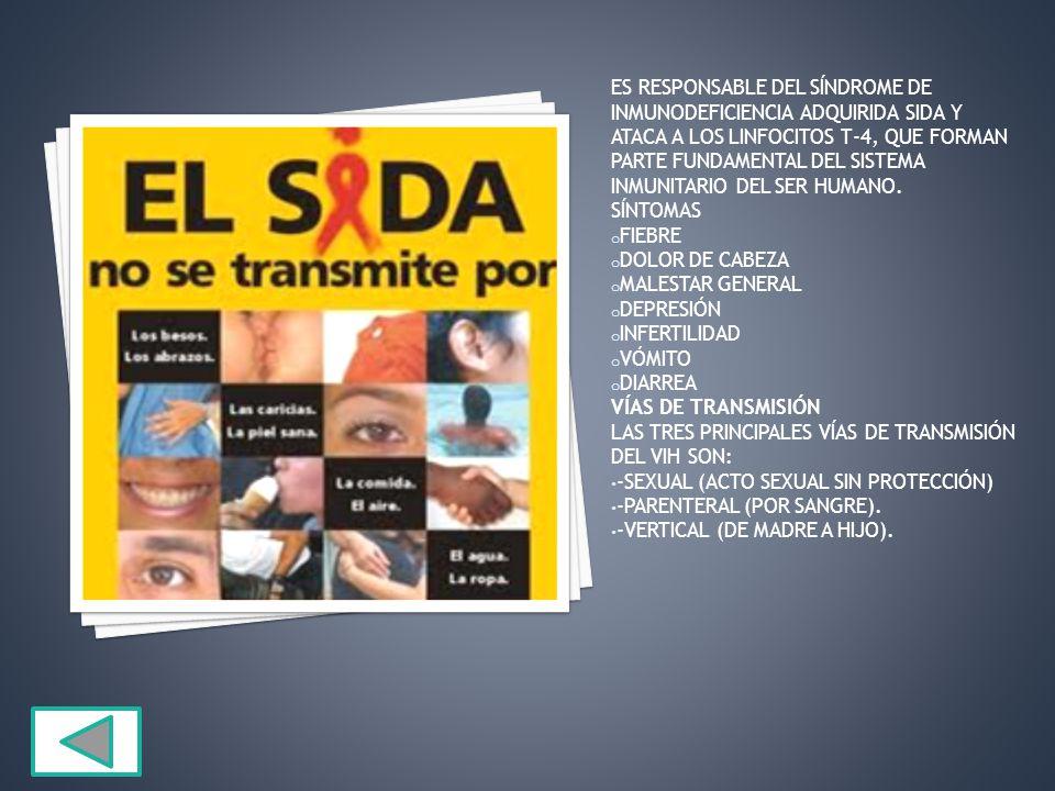 ES RESPONSABLE DEL SÍNDROME DE INMUNODEFICIENCIA ADQUIRIDA SIDA Y ATACA A LOS LINFOCITOS T-4, QUE FORMAN PARTE FUNDAMENTAL DEL SISTEMA INMUNITARIO DEL SER HUMANO.