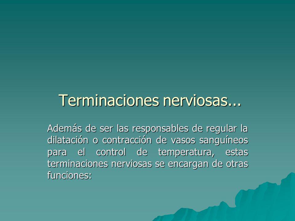 Terminaciones nerviosas...