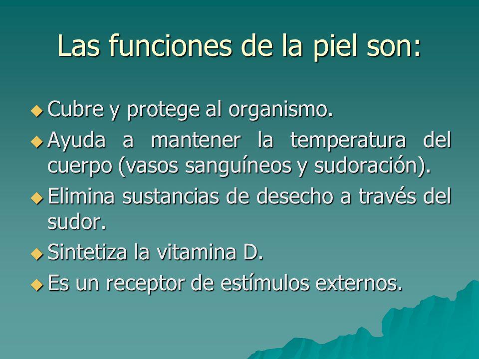 Las funciones de la piel son: