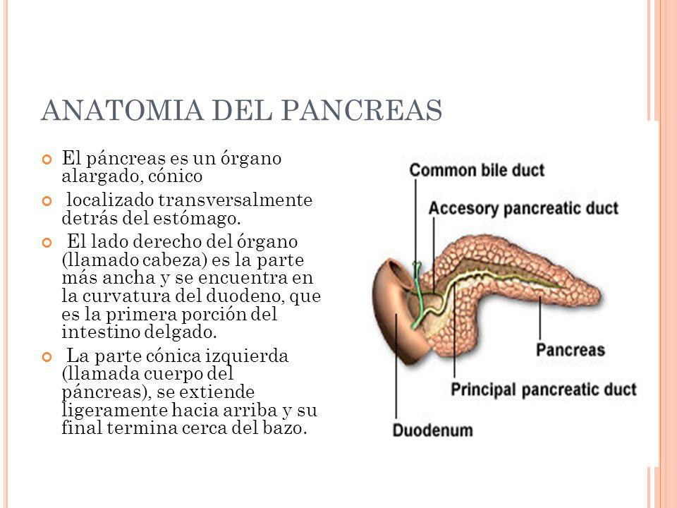 Fantástico Anatomía De La Diabetes Mellitus Elaboración - Anatomía ...