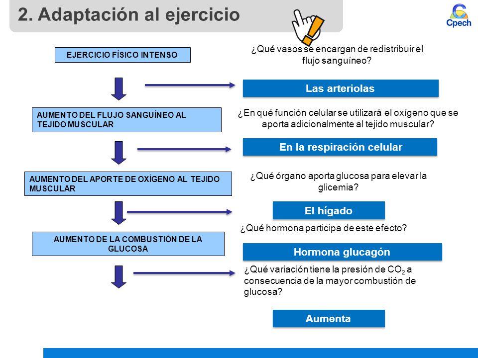2. Adaptación al ejercicio