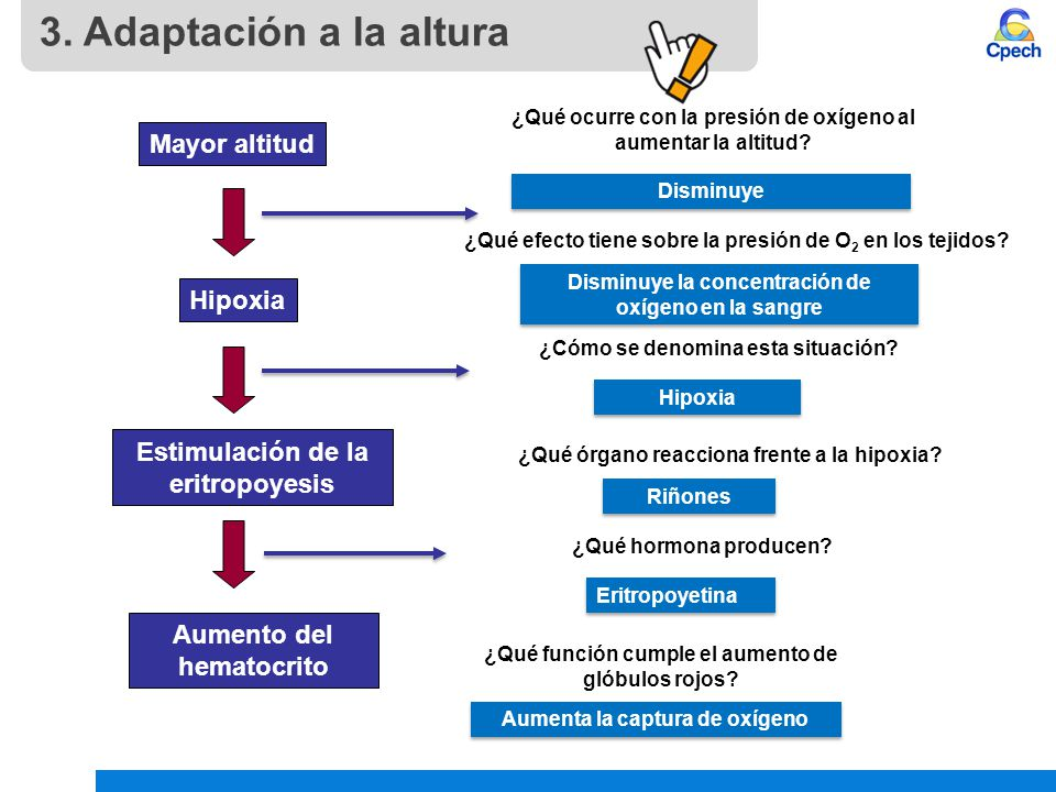 3. Adaptación a la altura Mayor altitud Hipoxia