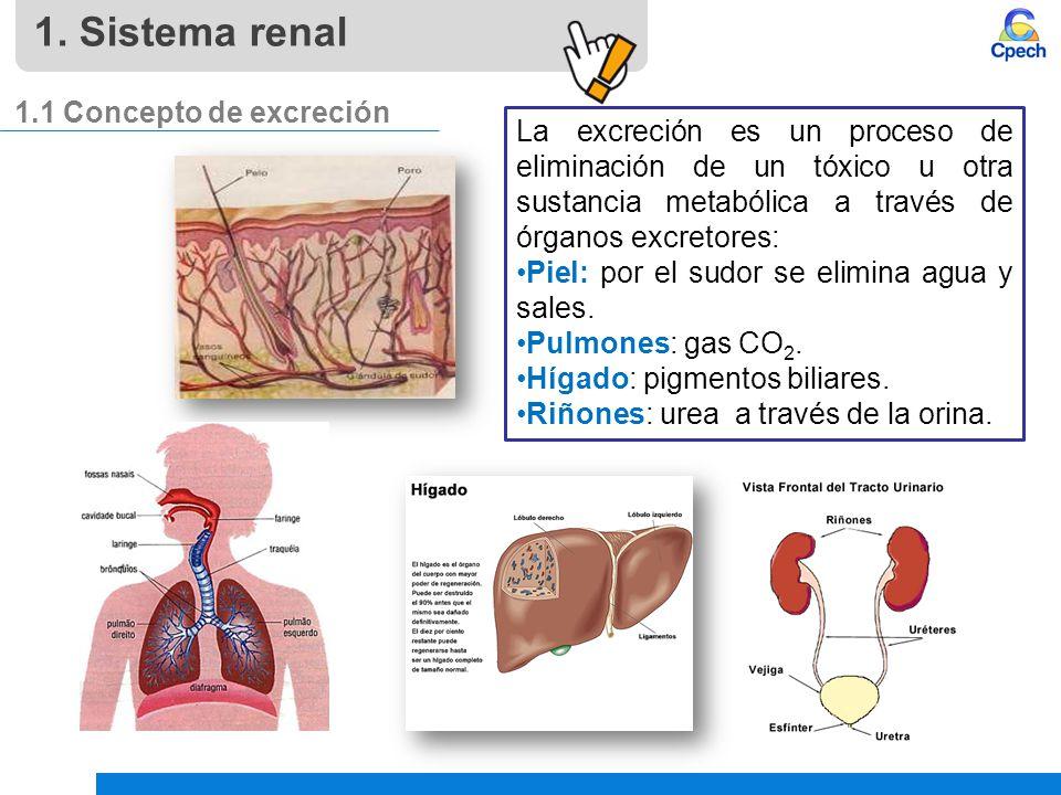 1. Sistema renal 1.1 Concepto de excreción