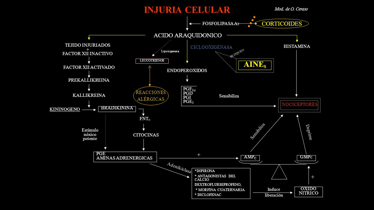 INJURIA CELULAR AINES CORTICOIDES ACIDO ARAQUIDONICO + +