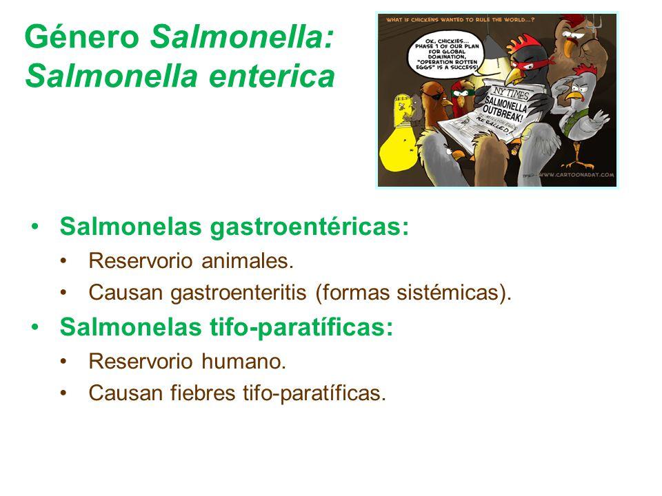 Género Salmonella: Salmonella enterica