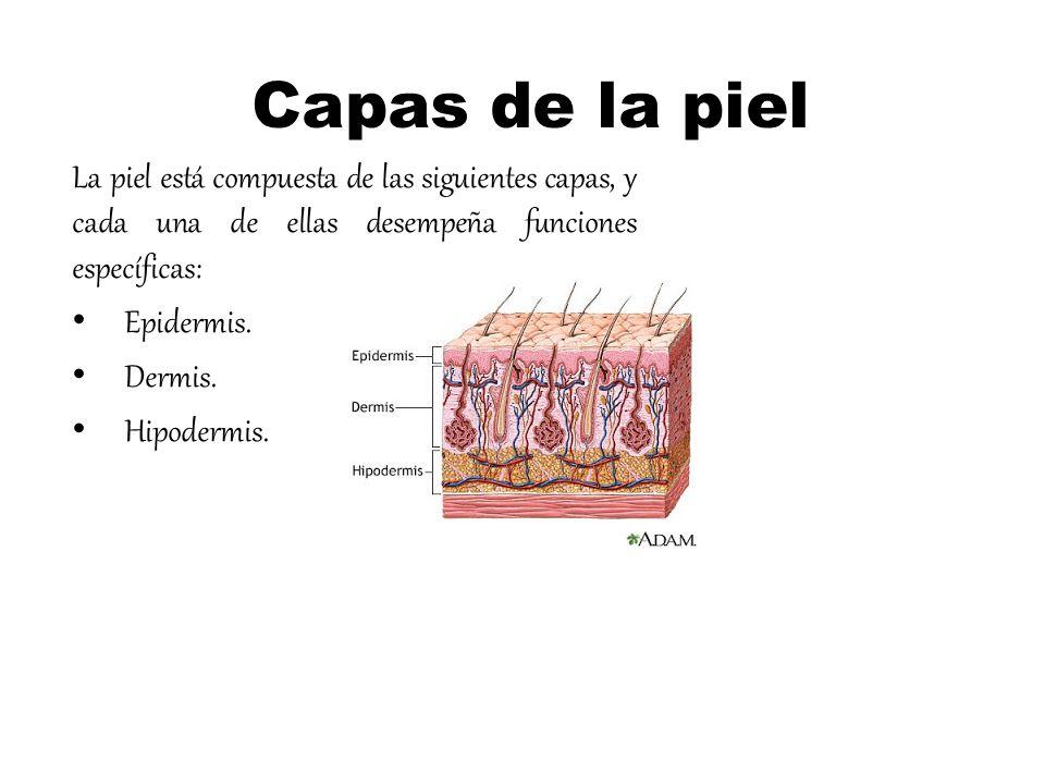 Capas de la piel La piel está compuesta de las siguientes capas, y cada una de ellas desempeña funciones específicas: