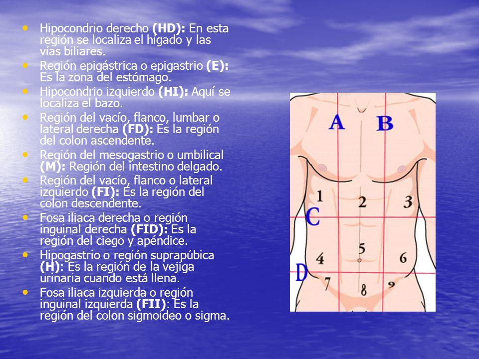 Hipocondrio derecho (HD): En esta región se localiza el hígado y las vías biliares.