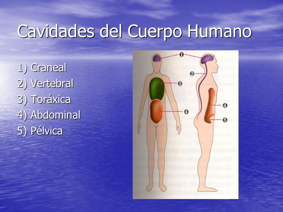 Cavidades del Cuerpo Humano