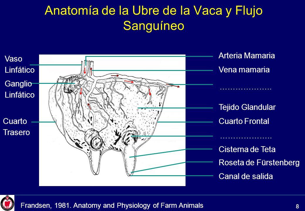 Contemporáneo Ubre De Vaca Anatomía Friso - Anatomía de Las ...