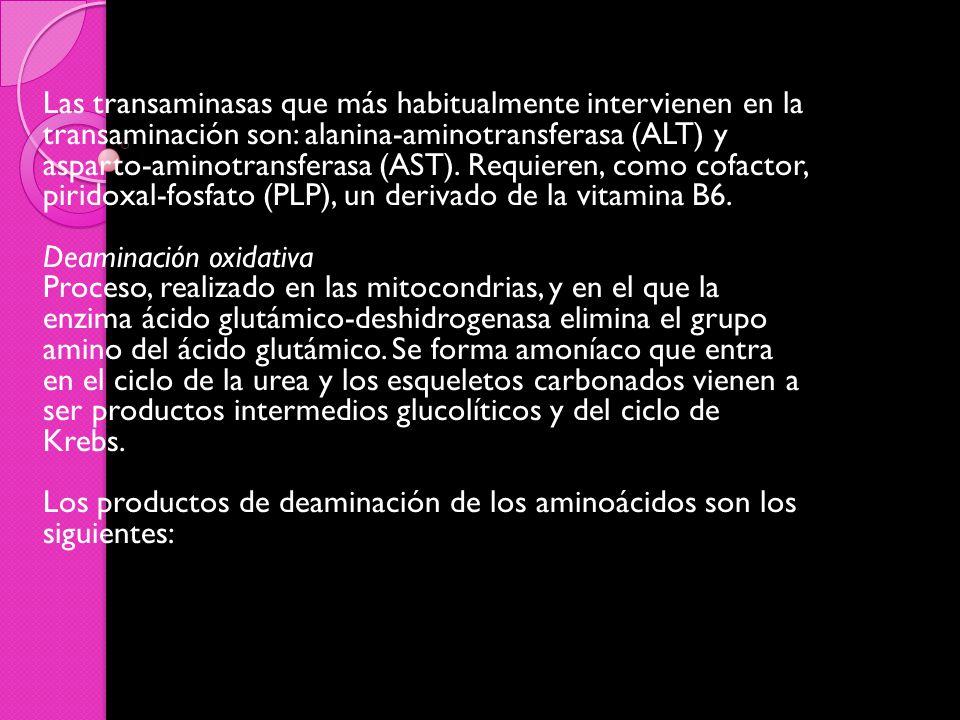 Las transaminasas que más habitualmente intervienen en la transaminación son: alanina-aminotransferasa (ALT) y asparto-aminotransferasa (AST).
