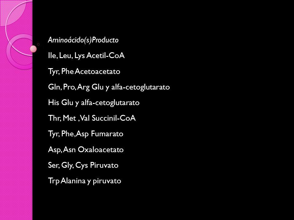 Aminoácido(s)Producto Ile, Leu, Lys Acetil-CoA Tyr, Phe Acetoacetato Gln, Pro, Arg Glu y alfa-cetoglutarato His Glu y alfa-cetoglutarato Thr, Met , Val Succinil-CoA Tyr, Phe, Asp Fumarato Asp, Asn Oxaloacetato Ser, Gly, Cys Piruvato Trp Alanina y piruvato