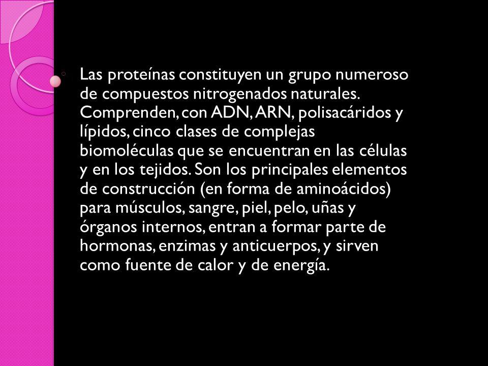 Las proteínas constituyen un grupo numeroso de compuestos nitrogenados naturales.
