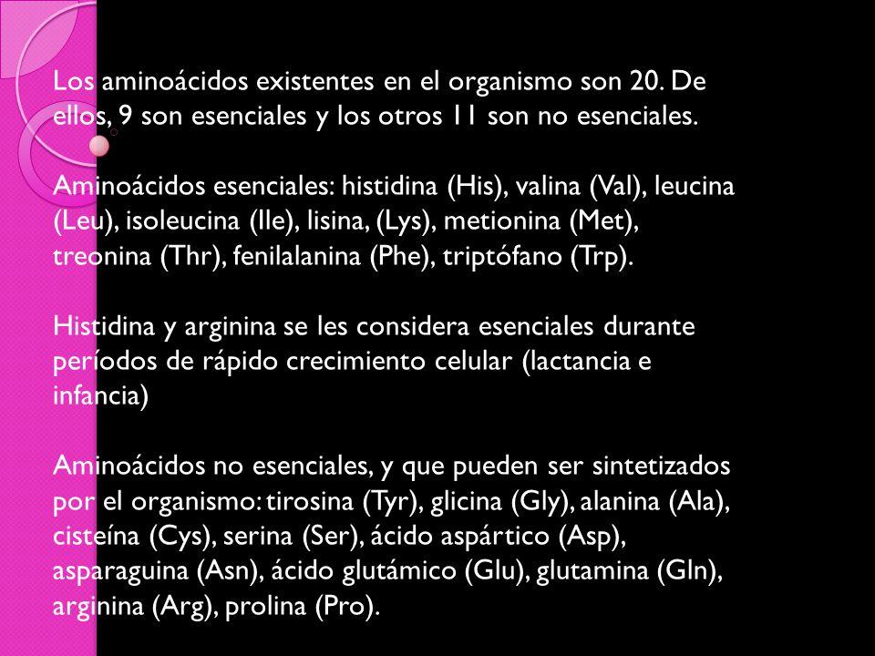 Los aminoácidos existentes en el organismo son 20