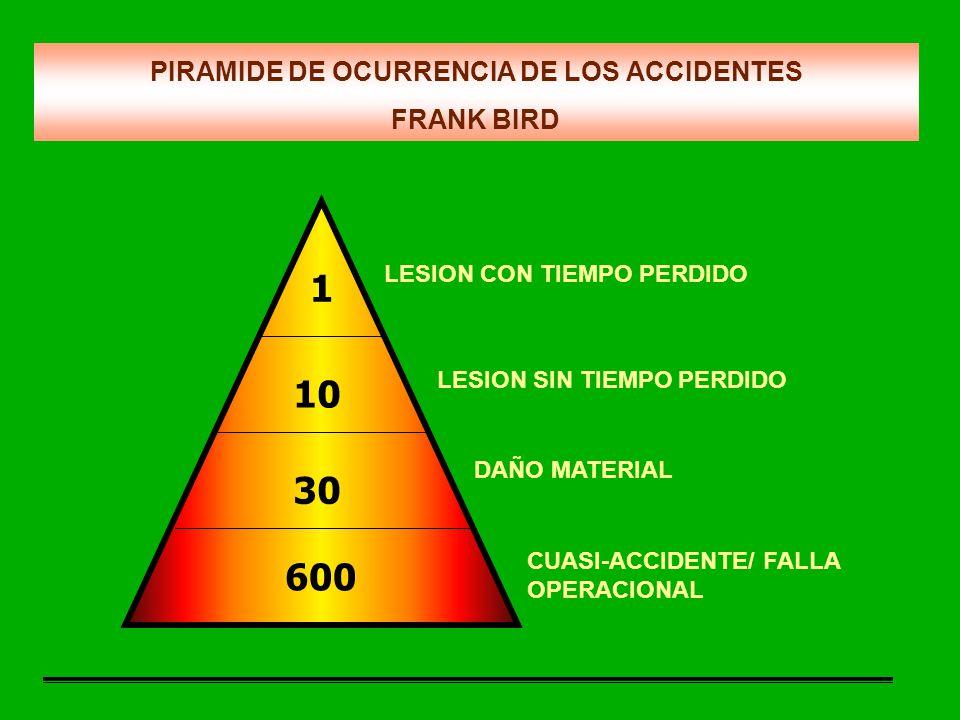 Frank Bird Birds Of Prey