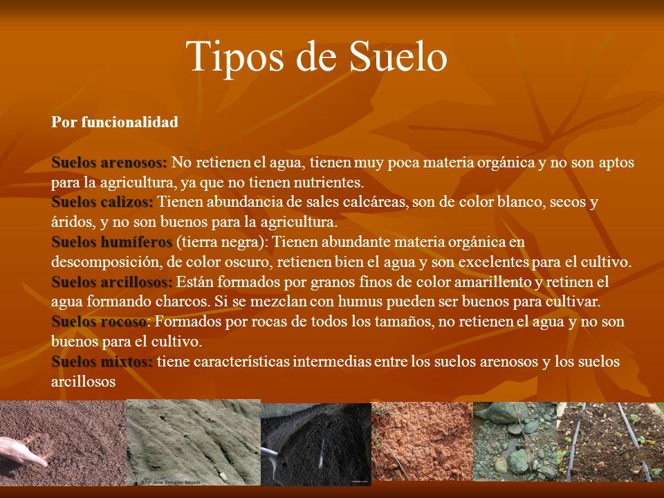 Que es el suelo el suelo es la fina capa superior de la for Tipos de revestimientos para suelos